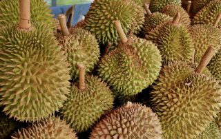Malaysia Gets extraordinary Durian Harvests