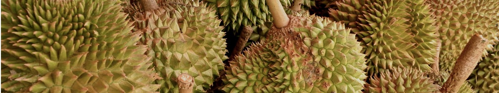 Musang King Durian Driving up Prices in China