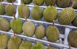 Malaysian Musang King Durian in China