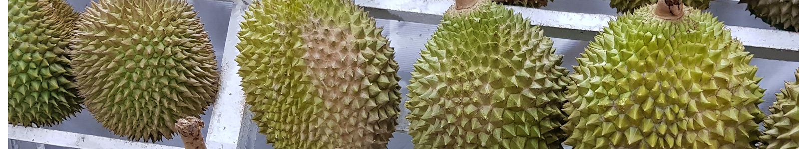 Musang King Durian Flavor Ice Cream is a Big Hit in India!