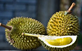 Better Durian Harvest Expected in Davao City