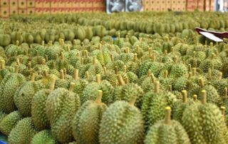 China's Durians Imports Grew Explosively in 2020