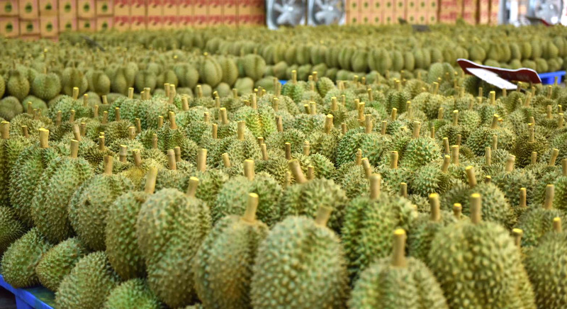 durian investment